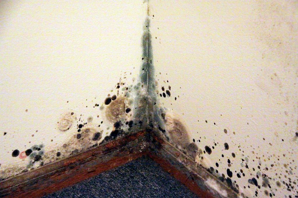 mold-in-corner